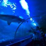 世界トップ10の巨大水族館•AQWAのお誕生日セレモニーに行ってきました!