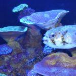 パースで出会える動物たち – アクワ水族館