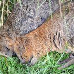 パースで出会える動物たち – カバシャム動物園