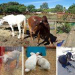 パースで出会える動物たち – スワンバレー・カドリー・アニマル ・ファーム