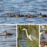パースで出会える動物たち – モンガー湖