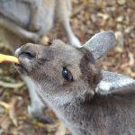 パースで出会える動物たち – ピール動物園