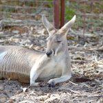 パースで出会える動物たち – パース動物園