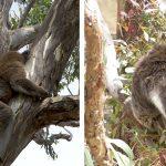 パースで出会える動物たち – ヤンチェップ国立公園